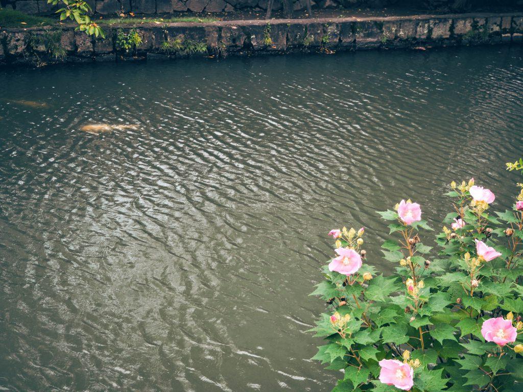 毎年大山名人杯倉敷藤花が開催されます。