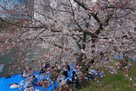 桜の木の下で縁台将棋〜OSAKA STREET SHOGI〜